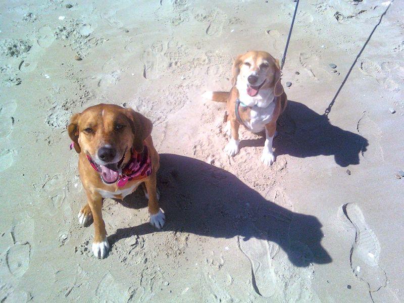 Gracie & Jazzmin