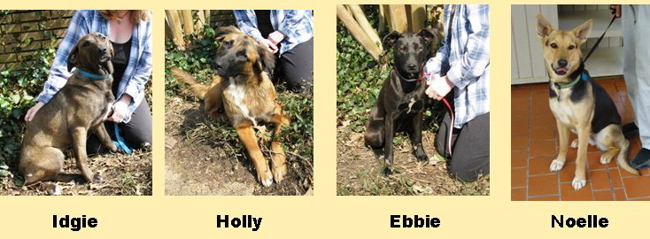 4 Dogs in need of Homes