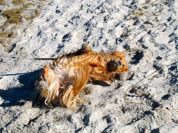 Crane beach green dogs program