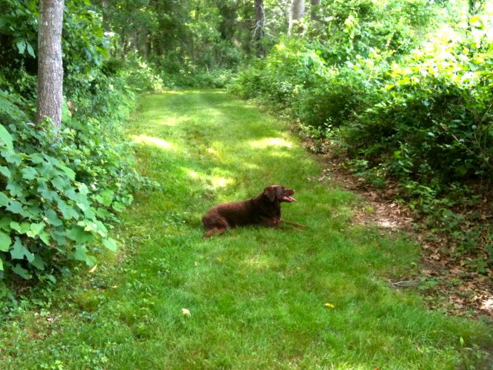 Ceildih in Slocum's woods