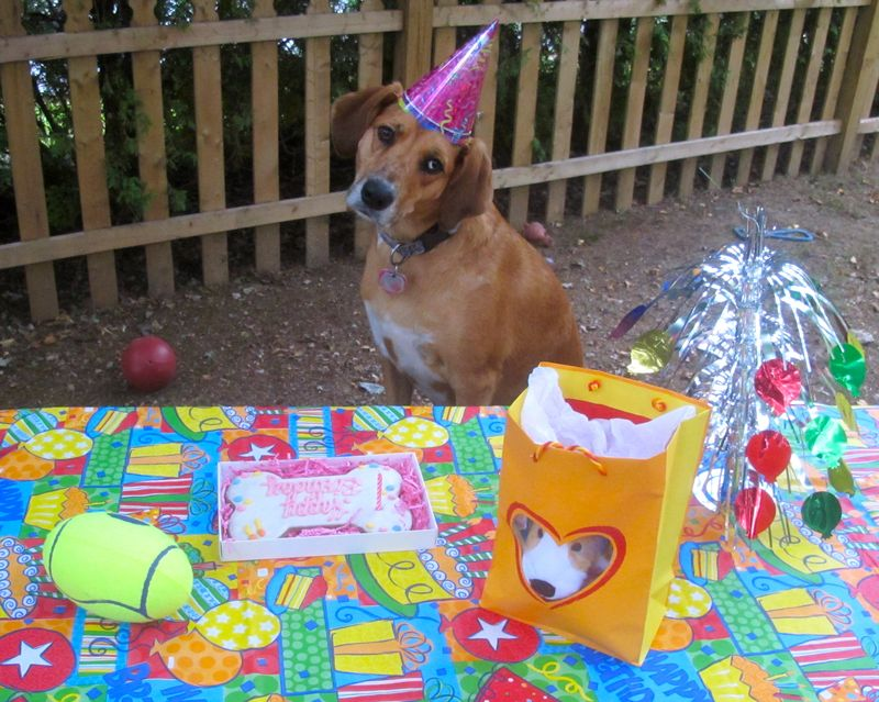 Gracie3rdBirthday