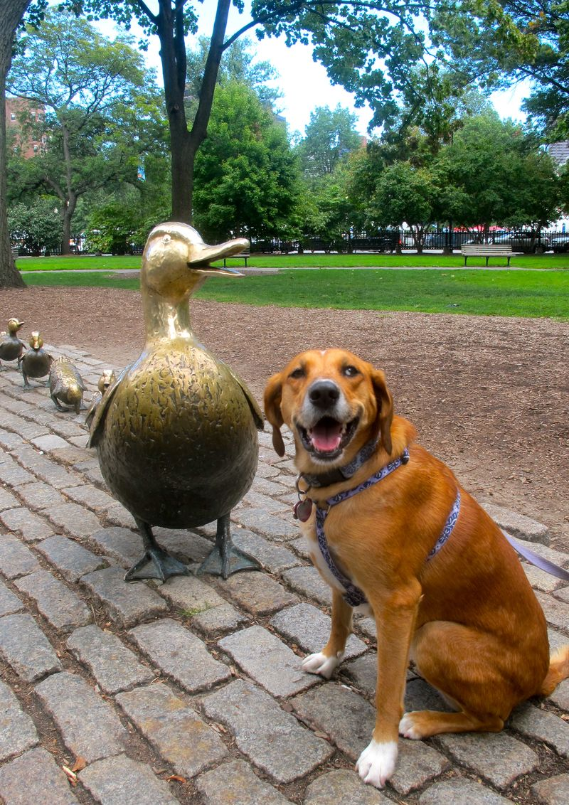 BronzeDucks