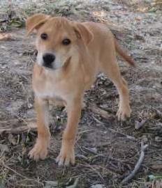 Brady Puppy