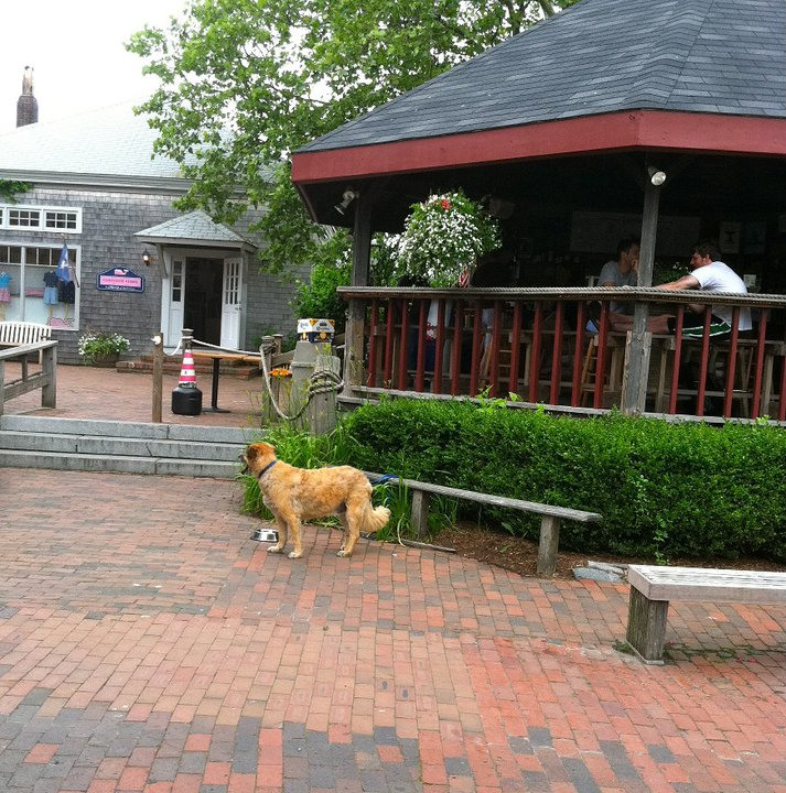 Pet Friendly Nantucket