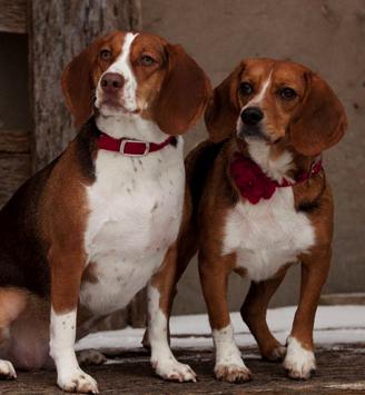 Daisy & Ruby
