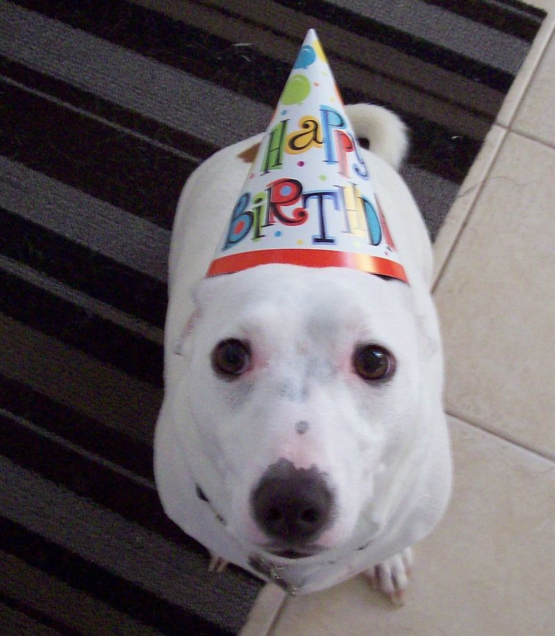 Dog Birthday Wishes