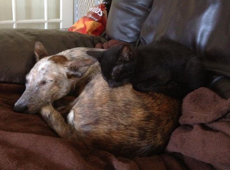 Dogandcatsleeping